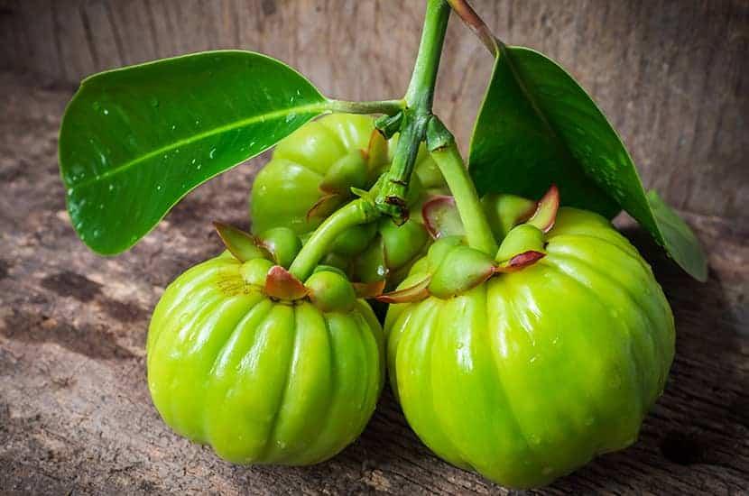 Gli studi suggeriscono che la Garcinia cambogia può aiutare a bruciare i grassi e a perdere peso