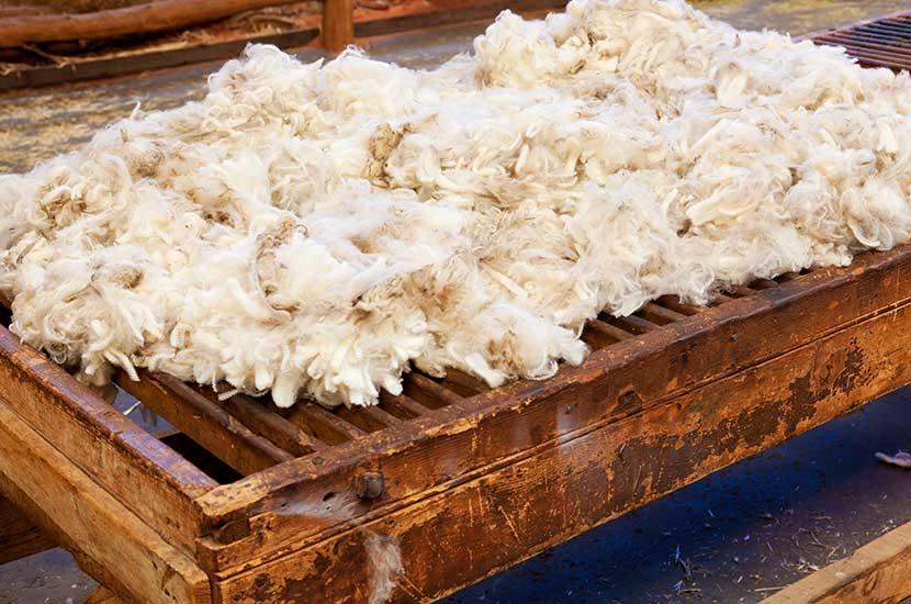 La lana è un derivato della lana